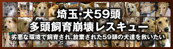 banner350-100.jpg